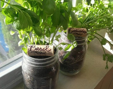 Mason Jar Herb Garden Featuring: The Potting Shed by Carlisle