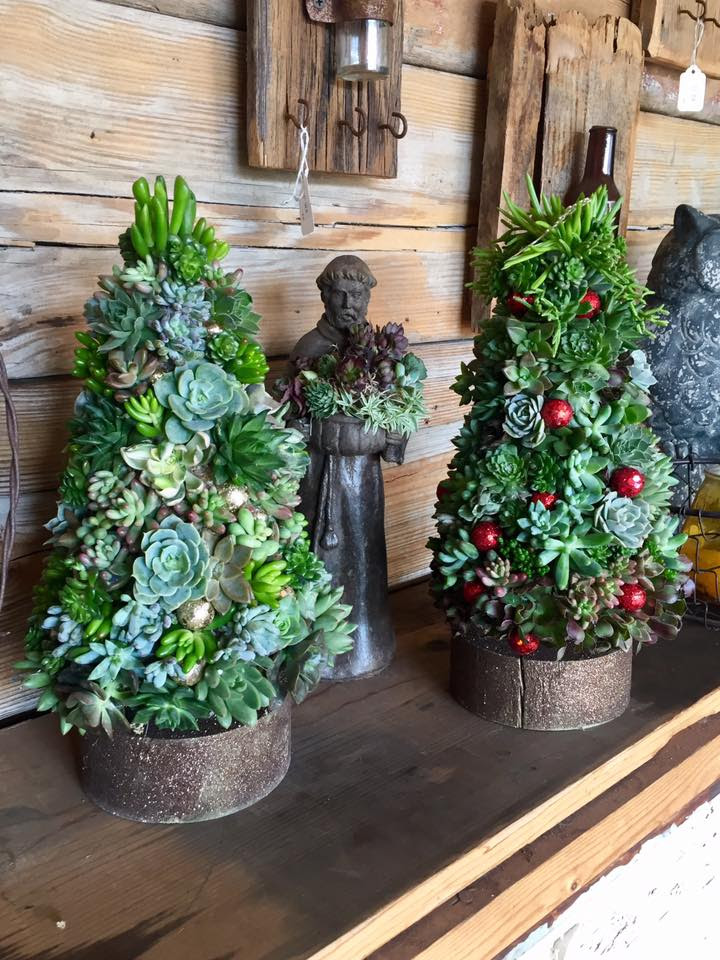 Succulent Christmas Tree Workshop At The Potting Shed By
