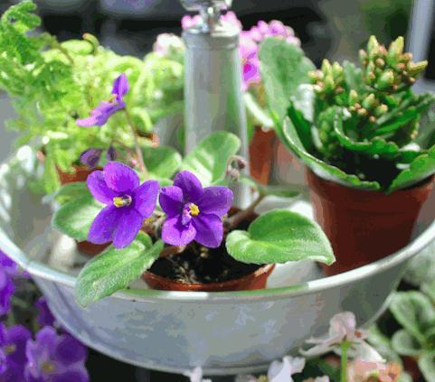 5 Gardening Tips For Spring