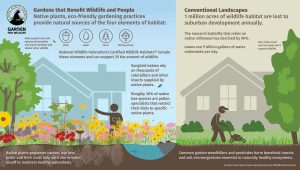 Garden for Wildlife vs. Conventional Yard Graphic from the National Wildlife Federation