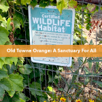 Wildlife Garden in Old Towne Orange