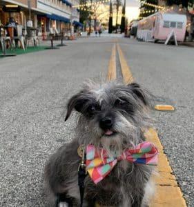 Dog at El Paseo in Old Towne Orange
