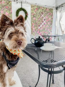 Dog at Paris in a Cup in Old Towne Orange